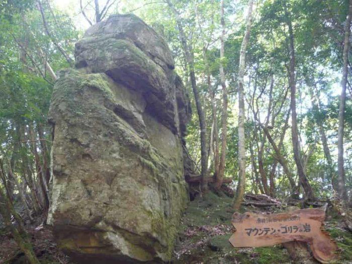 遊歩道にある『マウンテン・ゴリラ』の岩です。