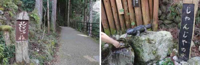 『じゃんじゃの水』と呼ばれる湧水です。