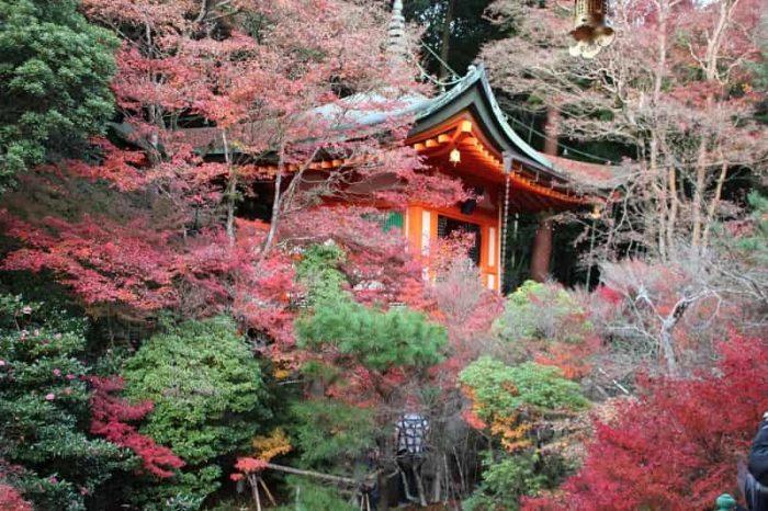 毘沙門堂の境内に色付く紅葉です。
