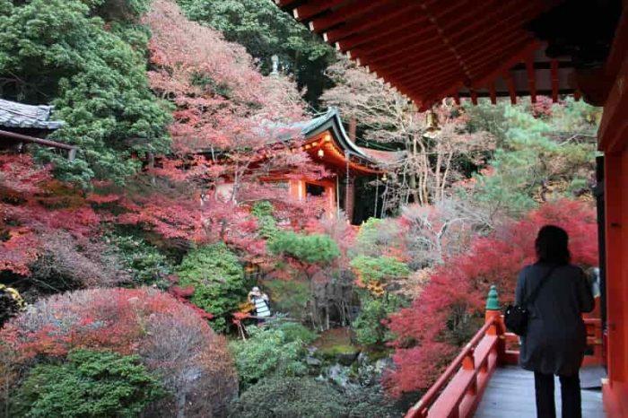 高台弁才天の社殿を包み込む紅葉です。