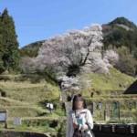 樹齢900年の『佛隆寺の千年桜』です。