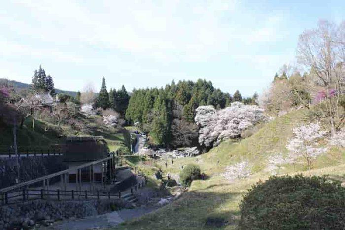 離れ場所から眺めた佛隆寺の千年桜です。