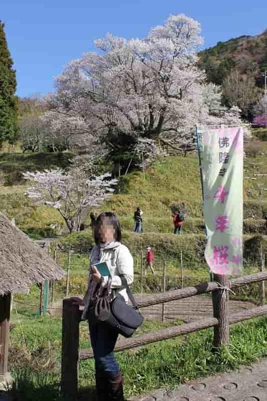 毎年4月第3日曜日に花見会が開催されます。