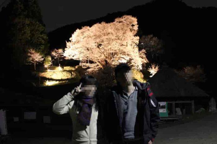 佛隆寺の千年桜のライトアップです。