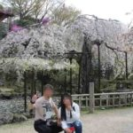 竹林院群芳園の一本桜の天人乃桜です。