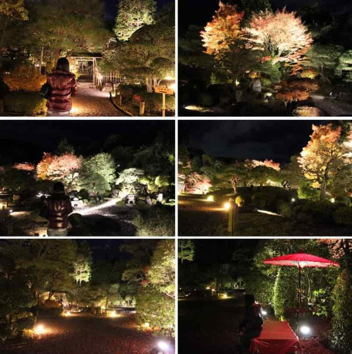友禅苑の紅葉のライトアップです。