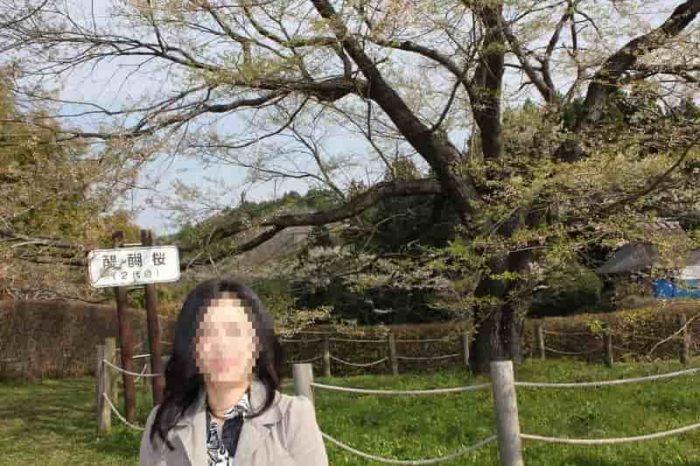 樹齢42年となる『2代目醍醐桜』です。