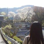 樹齢300年「大照寺跡の枝垂桜」です。