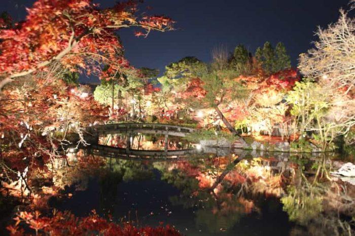 幻想的な紅葉のライトアップです。