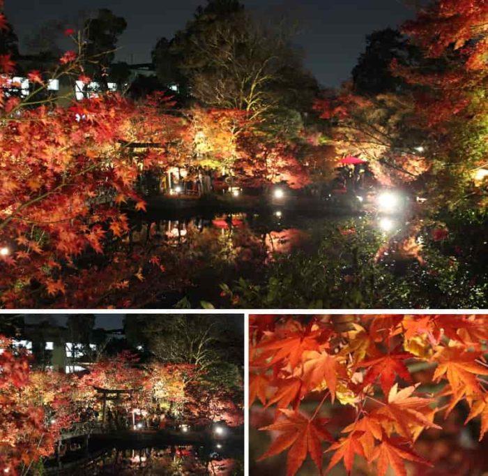 『夢庵』から眺めた紅葉の景色です。
