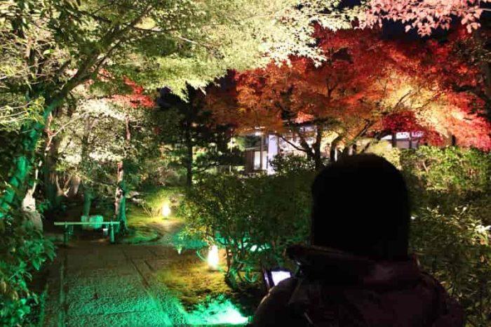 圓徳院で望める紅葉のライトアップです。