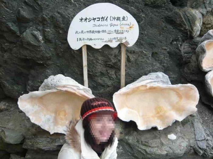 沖縄産の大きな『貝殻』です。