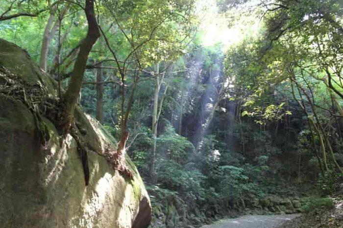 木漏れ日が遊歩道を照らします。