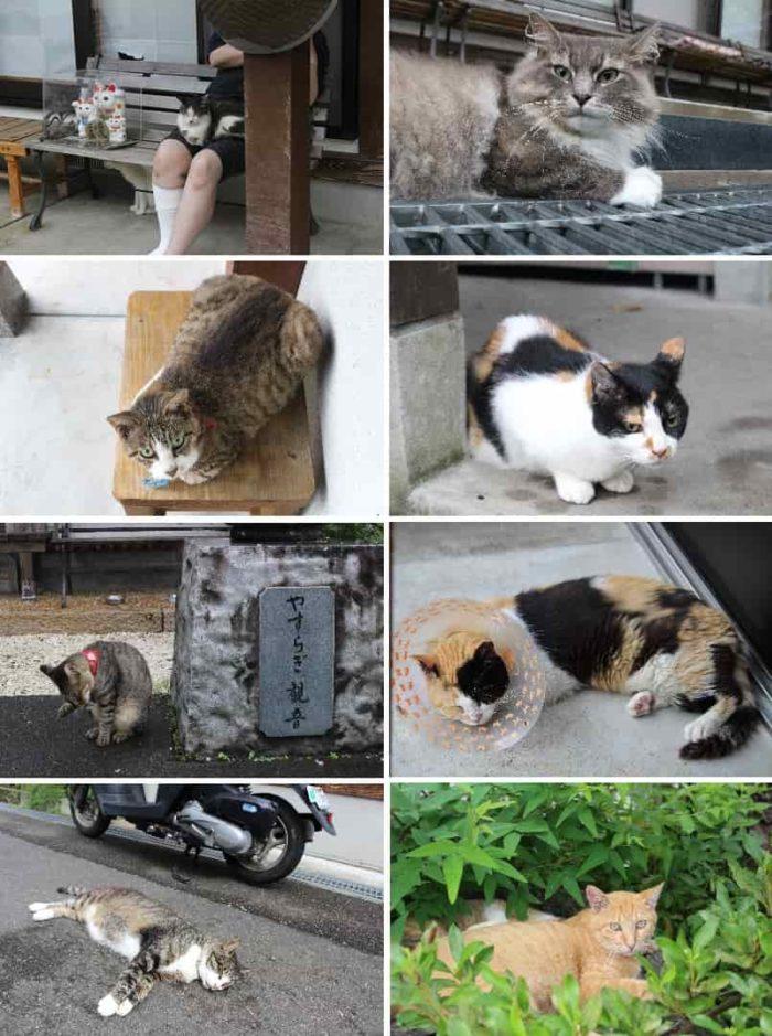 境内でくつろぐ猫たちです。