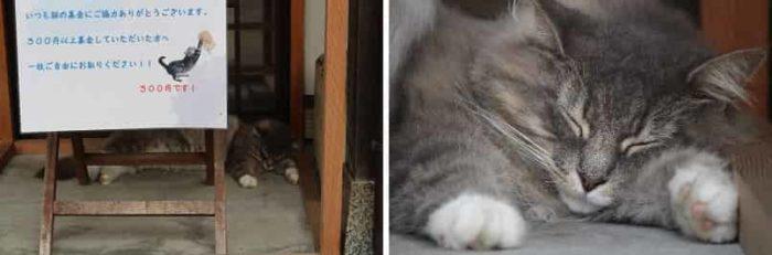 洋猫の『モフモフ』です。