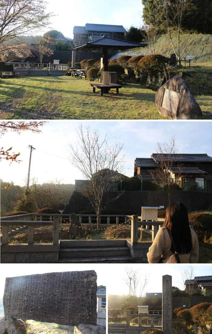 里帰りした四代目「花垣の八重桜」です。
