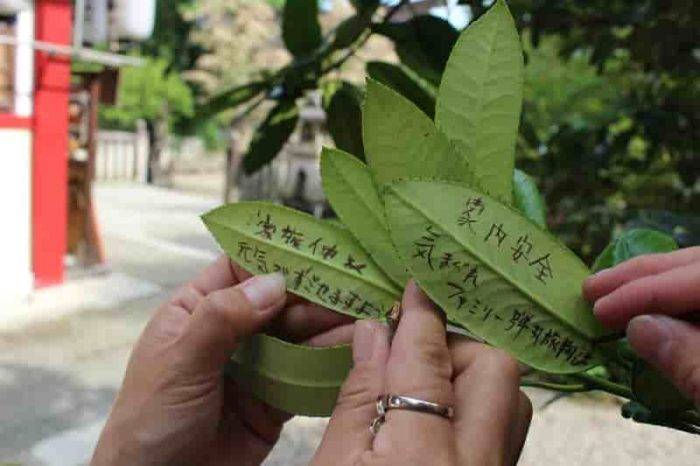 はがきの木と呼ばれる『多羅葉』です。
