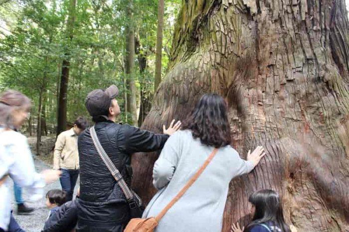 巨木よりパワーを充填しています。