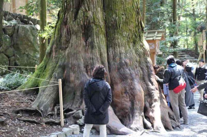 歴史を物語る立派な巨木です。