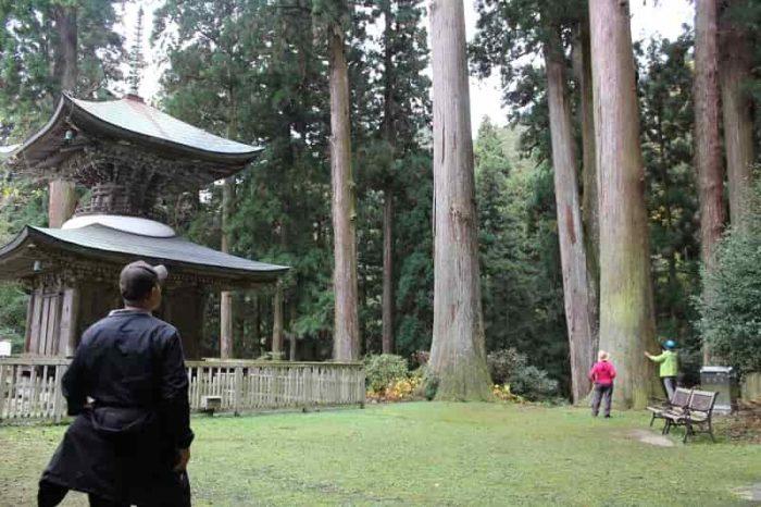 樹齢400年以上の杉林です。