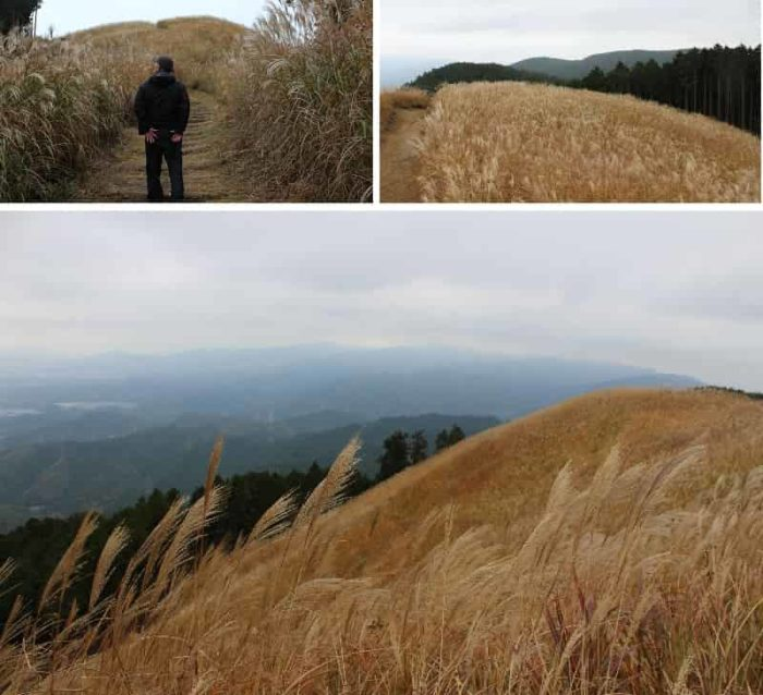 新河内長野八景・岩湧山頂の花すすきです。