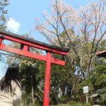 慈眼院の姥桜です。