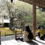 常照皇寺の庭園の様子です。