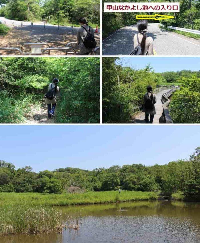 野鳥観察ができる甲山なかよし池です。
