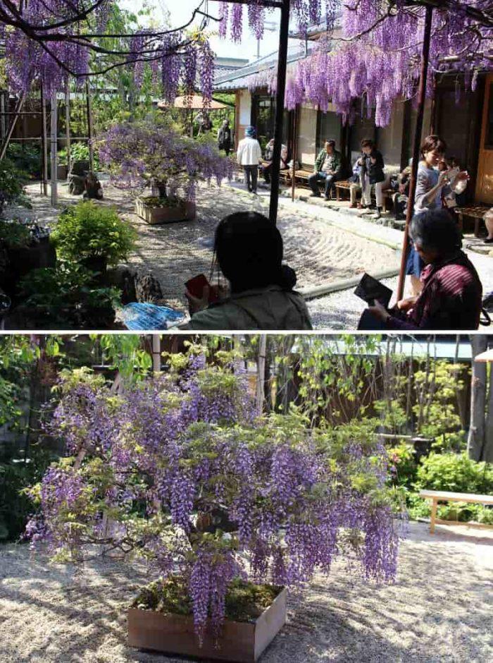 『梶本家』の中庭の景色です!