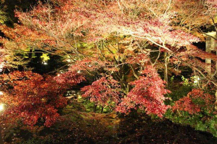 方丈北庭の紅葉のライトアップです。