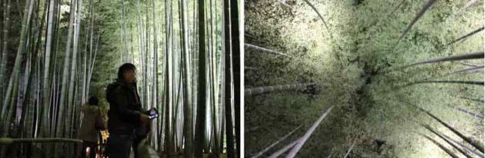 幻想的にライトアップされた『竹林』