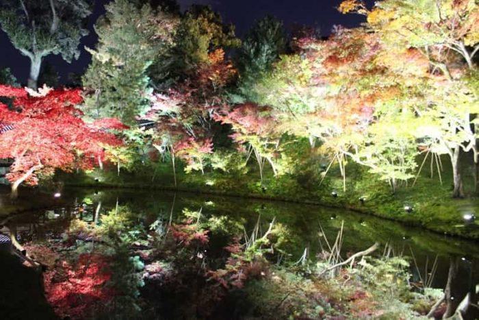 ライトアップされた色鮮やかな紅葉です。