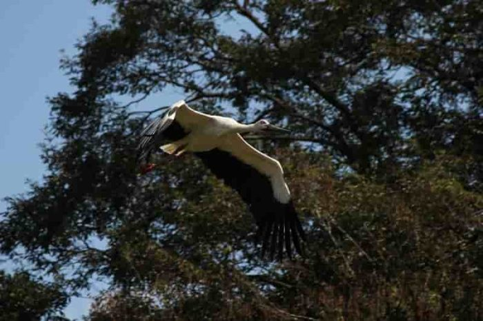 ダイナミックで優雅に飛ぶ姿です。