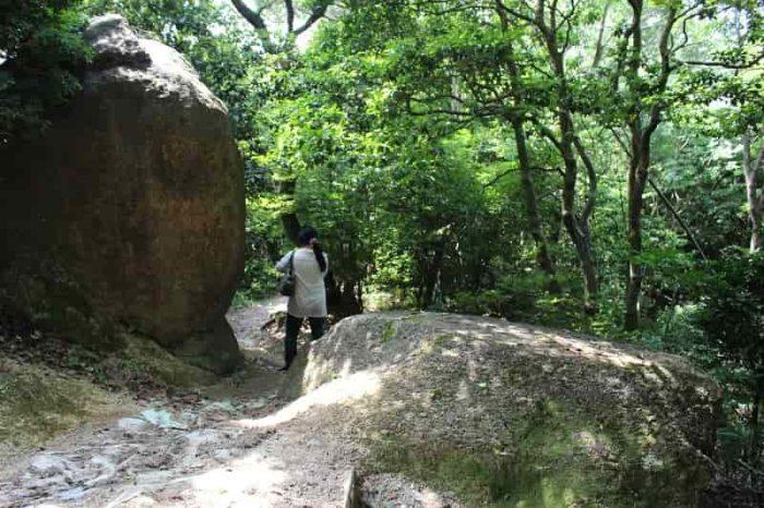 見どころの『木立の大石』です。