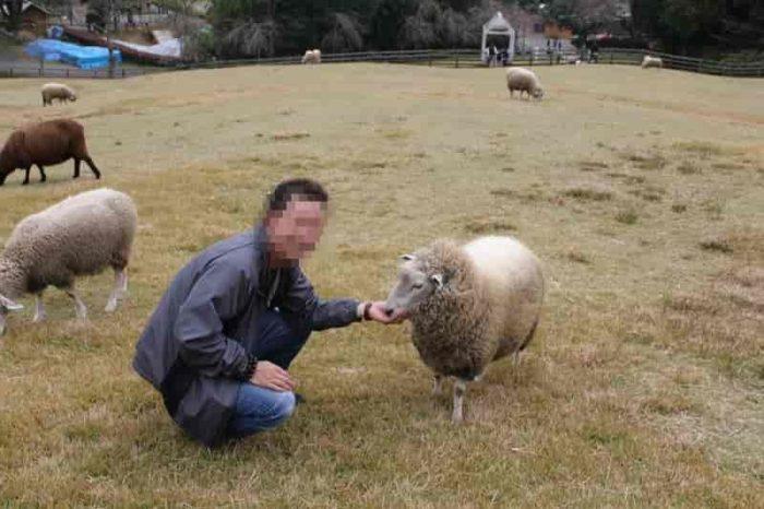 放牧場で羊たちに餌やり体験です。