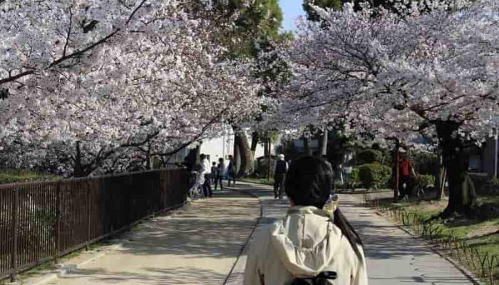 お約束の『桜のトンネル』です。