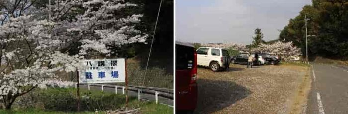 満願寺の八講桜の無料駐車場です。
