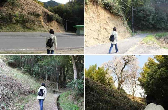 丘の上に登るための散策路です。