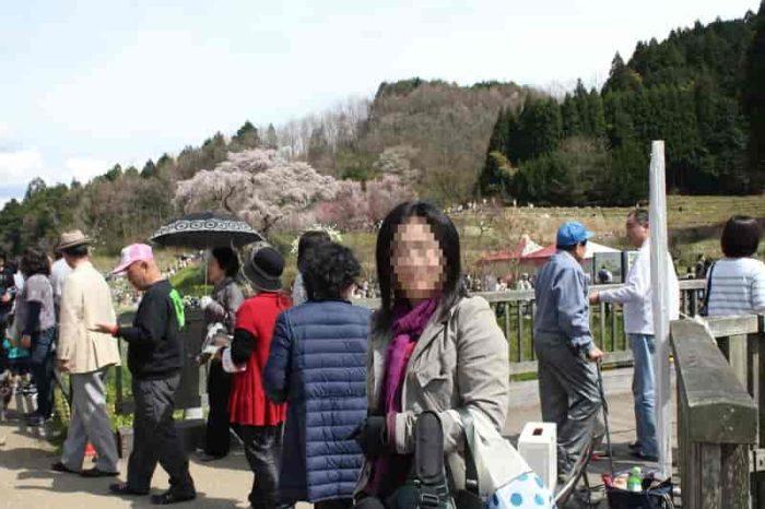 『桜まつり』が開催されます。