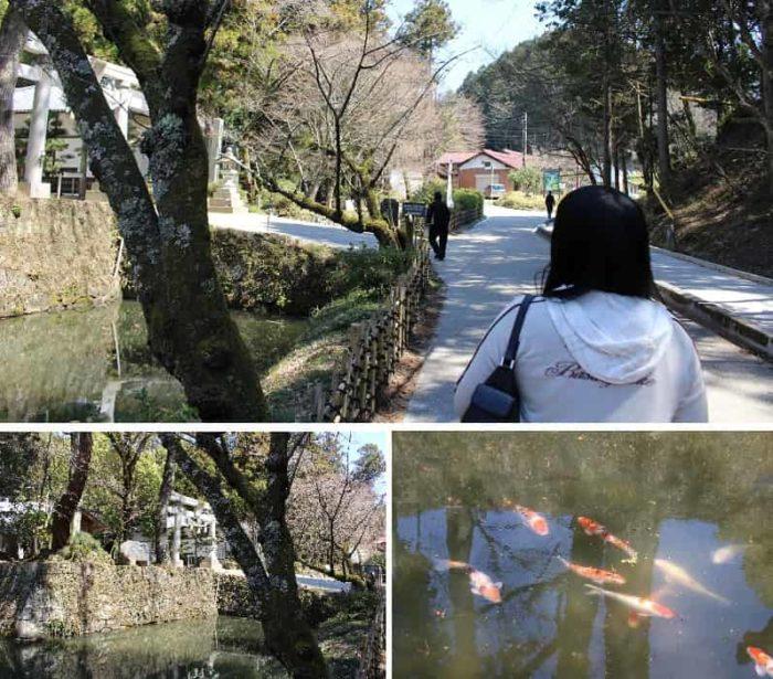 江戸時代に築かれた石垣です。