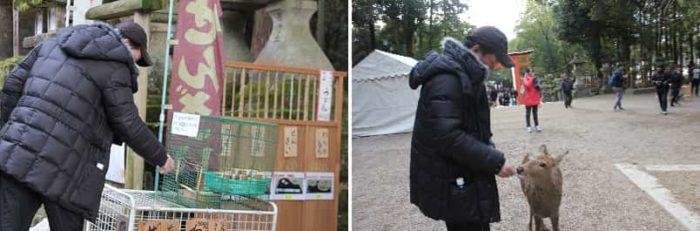奈良公園の名物『鹿の餌やり』です。