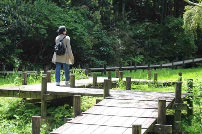 むろいけ園地の水辺自然園です。