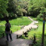 湿生花園のボードウォークです。