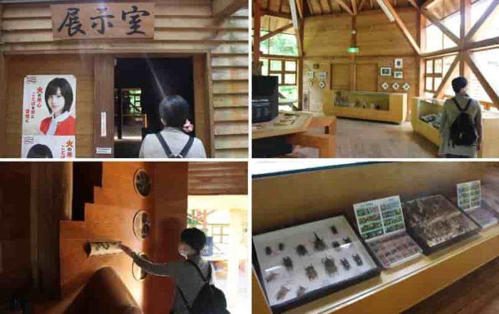 『森の工作館』の展示室です。
