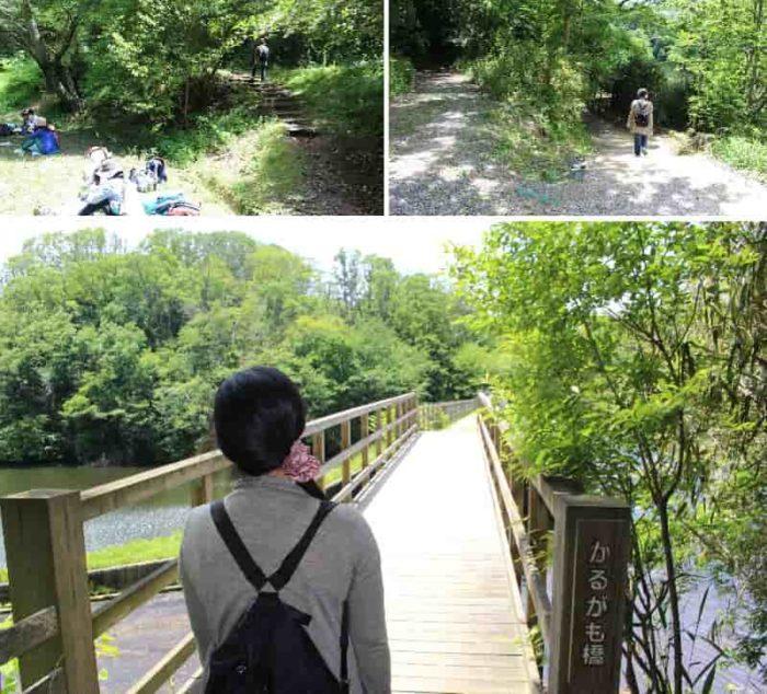 見どころのひとつ『かるがも橋』です