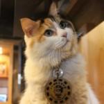 貴志駅の三毛猫『ニタマ』たまⅡ世駅長を襲名『スーパー駅長ニタマ』