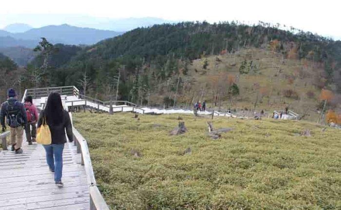 「正木ヶ原」へ長く延びる階段です
