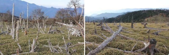 『立ち枯れの木』の景色です。