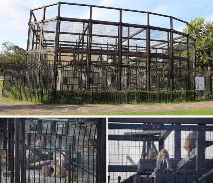 アカゲザルの「猿飼育舎」です。