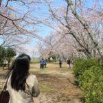 桜の名所「大井関公園」です。